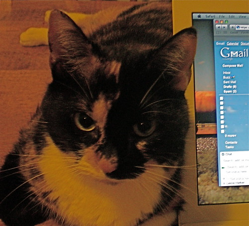 kitteh loves gmail