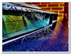 HDR Cobweb on the back of my car l must use it more often