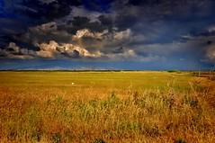 Field of Horizon