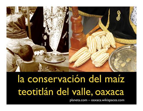 conserving corn (conservacion del maiz)