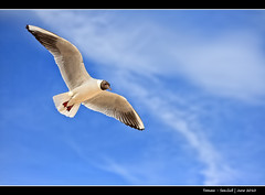 193/365 - Sea.Gull.@.1150x765.HQ (Pawel Tomaszewicz) Tags: camera new uk blue sea wallpaper england bird beautiful photoshop photography photo foto image photos gull creative picture images x dorset gb 1200 fotografia 800 sandbanks poole anglia aparat iphone pawel ptak tomasz  ipad    mewa  1200x800 fotografowie polscy  tomaszewicz paweltomaszewicz