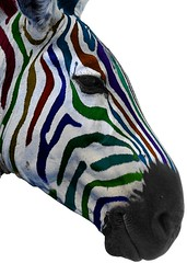 Multi colour zebra (@Doug88888) Tags: color colour animal canon eos stripe experiment zebra multi 400d