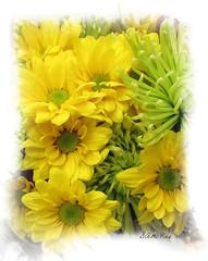 Floral Bouquet (SAMcRAE PHOTOGRAPHY) Tags: daisy bouquet chrysanthemum colorphotoaward