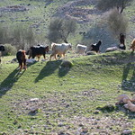 Iran landscape 02 by