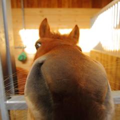 nose (Matthias CHARPIOT) Tags: horse yellow jaune canon cheval nose eos nez 1022mm 1022 50d
