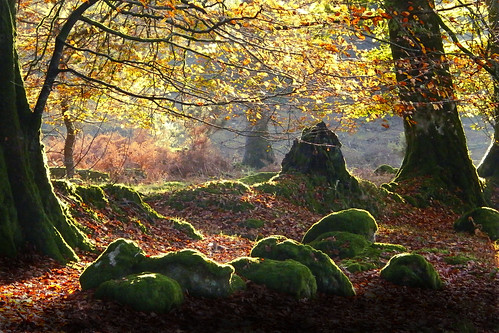 Woodland - flckr - Mark Coleman (Downloadable photos)