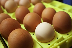 (Nooraaa) Tags: light brown white contrast dark alone egg single eggs