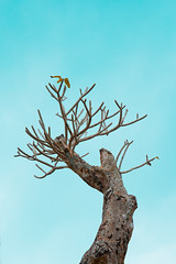 (ilhambasz) Tags: nature tree a7 sonya7 sony minimalism orangeandteal lightroom 2870 2870mm