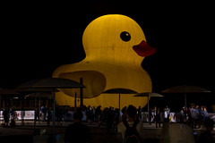 DSC_3988 (Quantum Stalker) Tags: toronto ontario canada 150 day celebration hto park harbourfront rubber duck giant six storey night