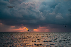 two birds ... (mariola aga) Tags: puntacana dominicanrepublic atlanticocean morning sunrise sky clouds sun sunlight waves birds two together whowithwho light reflection water nature