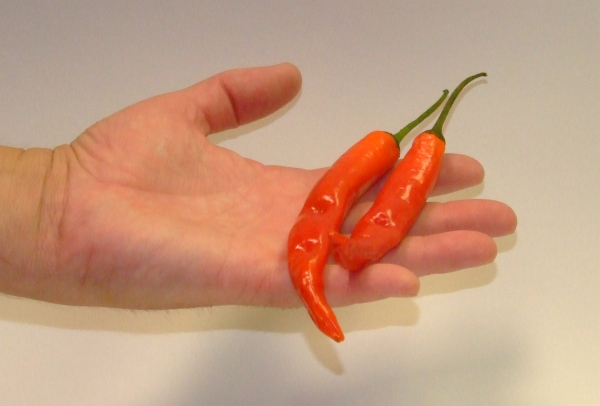 cayenne chilli pepper 01