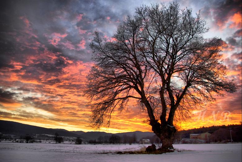 Ağaç (Abant)