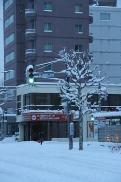 雪 (7).JPG