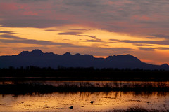 Sutter Buttes (Vurnman) Tags: sunset orange reflection field rice norcal sutterbuttes buttecounty hwy162