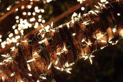 Lights (gringogringo) Tags: christmas tree natal lights bokeh christmaslights christmasdecorations luzes arvore lampadas