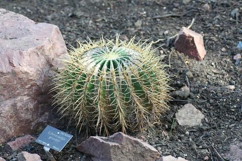 20090919 Edinburgh 20 Royal Botanic Garden 305