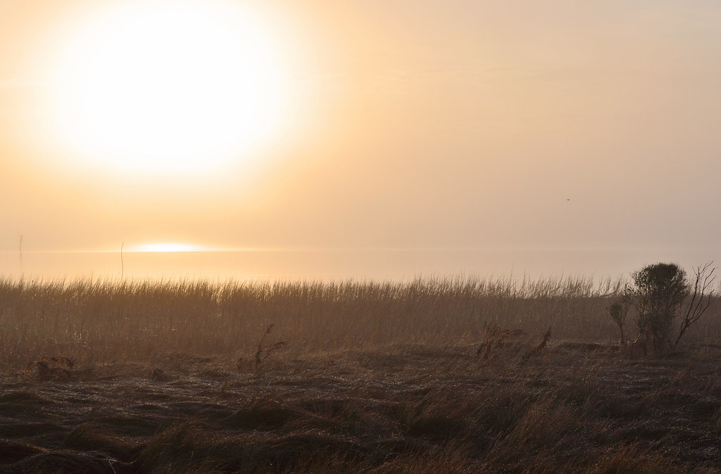 Spartina Sunrise 4