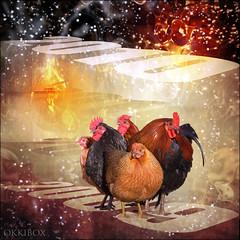 New Years Day (okkibox) Tags: chickens birds animals happynewyear topseven pentaxk10d theunforgettablepictures okkibox daarklands boxofhappymemories magicunicornverybest selectbestfavorites selectbestexcellence sbfmasterpiece