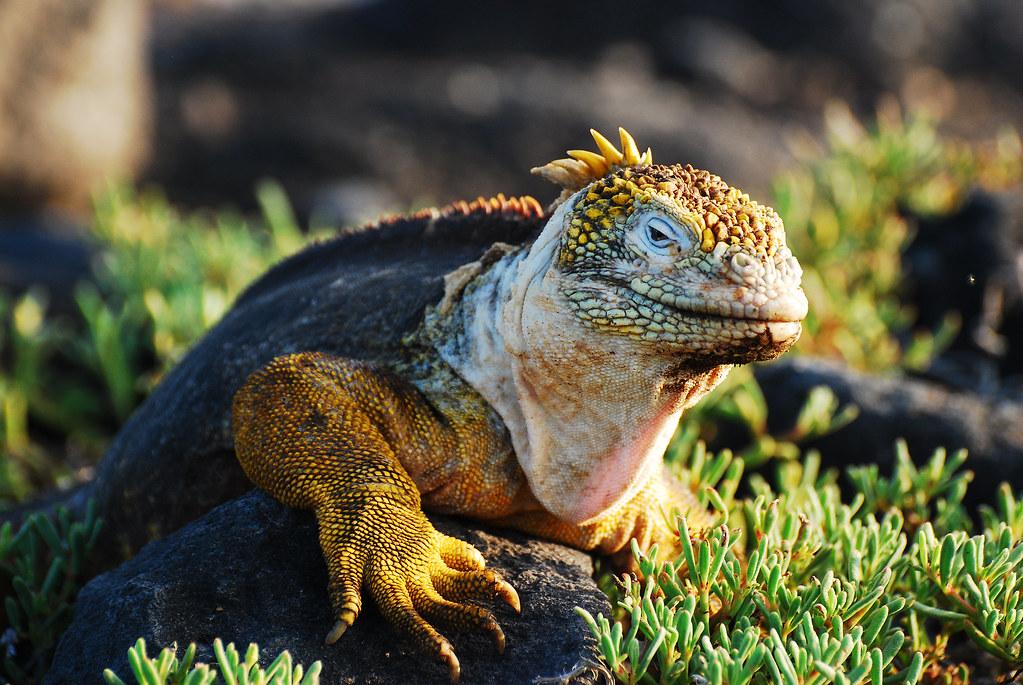 Galapagos Islands-262