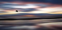 Lonely Heron (John Spooner) Tags: sunset sea bird beach heron canon scotland interestingness sand horizon gimp wave explore shore ardeacinerea dumfriesgalloway galloway 457 g11 dumfriesandgalloway solwayfirth monreith lucebay canonpowershotg11 canong11 dumgal