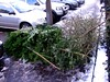 Pavement Barricade (Evil Cheese Scientist) Tags: xmas christmastrees deadtrees christmasisover