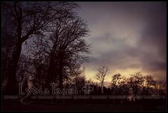 Eternal life (Lydia Tausi Photography) Tags: madrid park parque trees winter sunset sky espaa orange tree canon atardecer twilight rboles purple violet cielo rbol invierno naranja retiro violeta crepsculo parquedelretiro comunidaddemadrid morado eos450d buenretiro ladyliseth lydiatausi