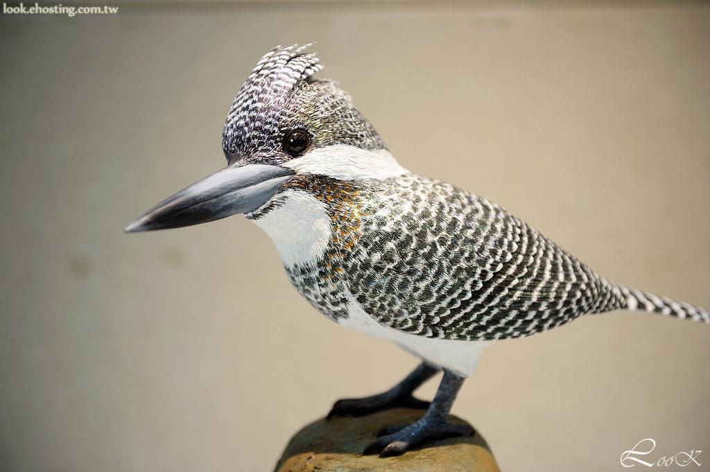 日本野鳥雕刻協會 (JBCA)