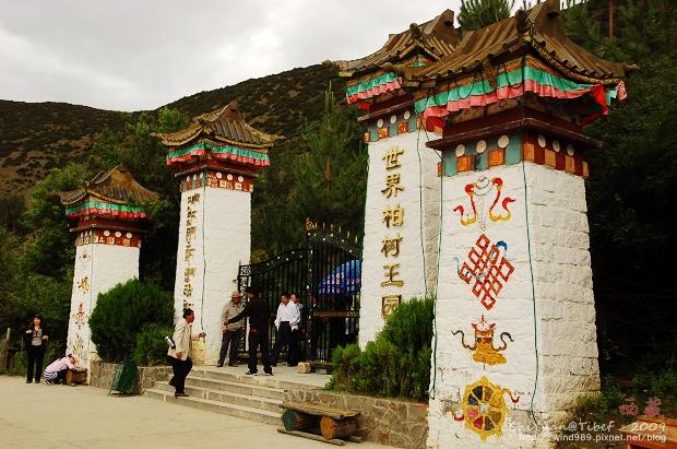 [西藏]林芝世界柏樹王園林。三千柏樹之王