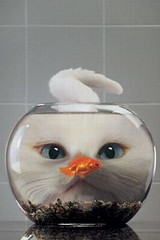 Cat and the Fishbowl iPhone wallpaper