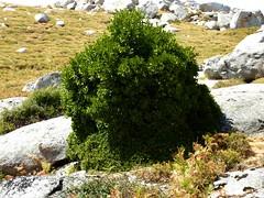 Buisson sur la crête de Prunu