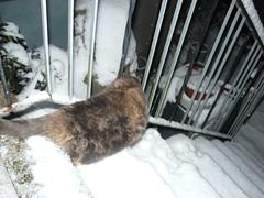 Katze im Schnee2