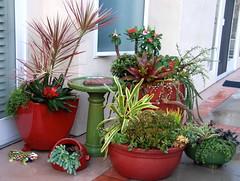 Succulent Container Gardens (Joyce-Tex-Buckner) Tags: red plants nature garden rocks ceramics bromeliad succulents containers tillandsias dishgardens theplantman