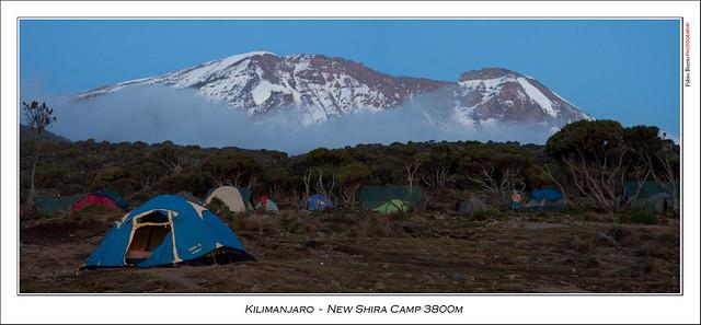 Kilimanjaro at sunrise