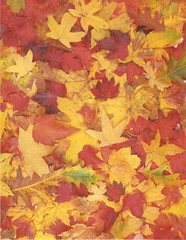 leaves background (Candyn29**) Tags: fallleaves collage paper ephemera atcbackground