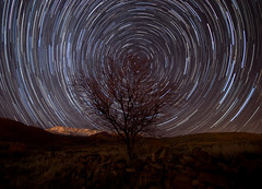 Cloudless Night (Bill Ratcliffe) Tags: longexposure nightphotography tree stars star utah nightshot ghosttown southernutah stgeorge startrail d90 harrisburgutah treestartrail