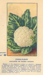 legume88 chou fleur