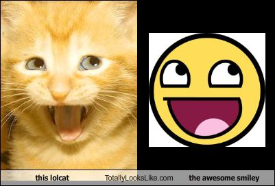 this-lolcat-totally-looks-like-the-awesome-smiley