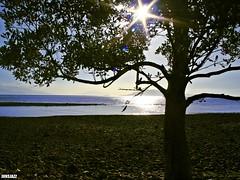 Heavenward (junsjazz) Tags: tree nature leaves fun branches horizon shade sunsea pinoykodakero teampilipinas junsjazz litratistakami