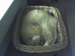 Optimal feline storage