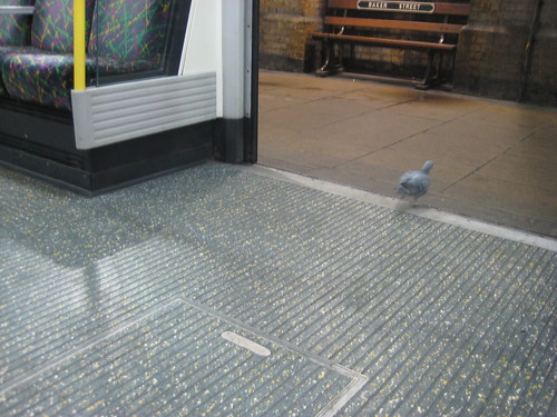 Pigeon at Baker Street