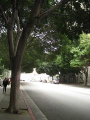 IMG_7309 (gfixler) Tags: tree fig ficus figtree chinesebanyan hugetree largetree curtainfig ficusmicrocarpa indianlaurel ficusnitida ficusmicrocarpanitida