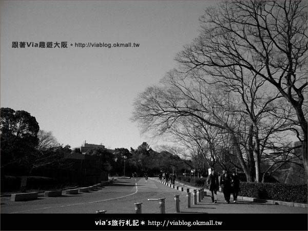 【via關西冬遊記】大阪城天守閣!冬季限定:梅園梅花盛開20