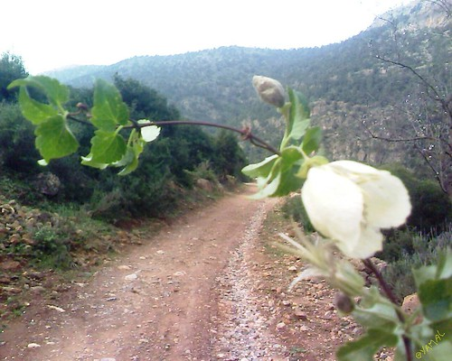 Beni Znassen Wachkrad جبال بني يزناسن وشكراد