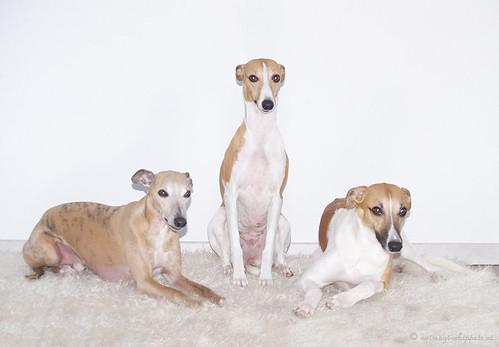 Coco, Nisha & Quentin
