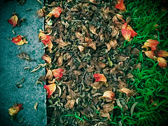 (Mei Todd) Tags: leaves pavement ground flowersgrass