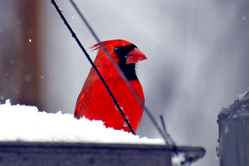 1 cardinal