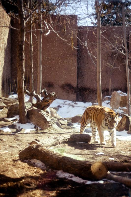 Zoo (2 of 15)