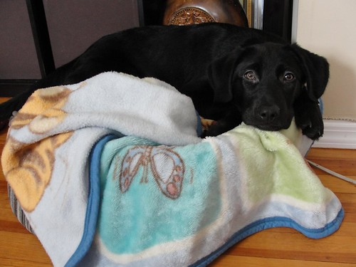 Chloe - 4 months 10