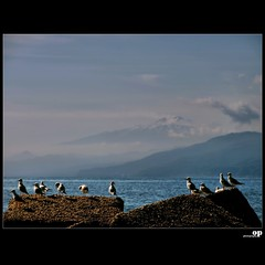 Winter Beach - Waiting For Spring (Osvaldo_Zoom) Tags: winter sea italy seagulls beach seaside nikon gulls sicily etna calabria volcan messinastrait d80