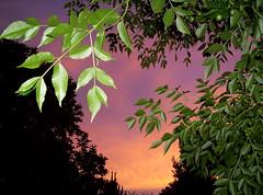 Si, ya sé que estás leyendo... tu cuerpo desnudo, necesita de un poeta?... (conejo721*) Tags: argentina atardecer árboles cielo nubes ocaso palabras mardelplata crepúsculo poesía poema preguntas conejo721
